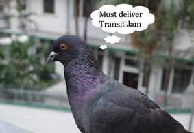 A grey Hong Kong pigeon with iridescent purple and green neck... a thought bubble above their head reminding them they need to deliver Transit Jam
